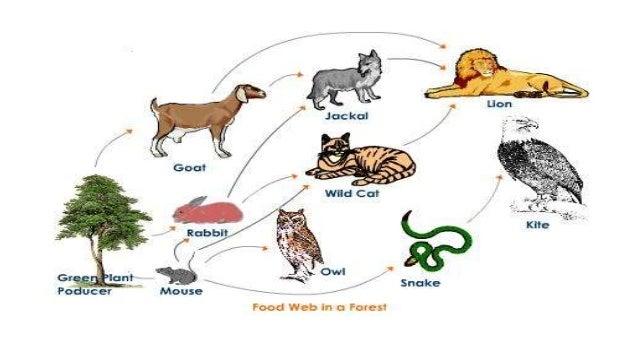 Land Animal Food Chain | www.pixshark.com - Images ...