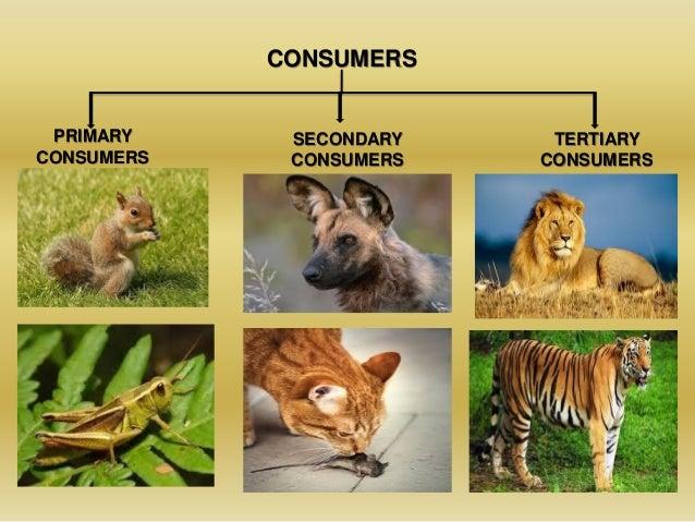 Ecosystems Grassland Secondary Consumers