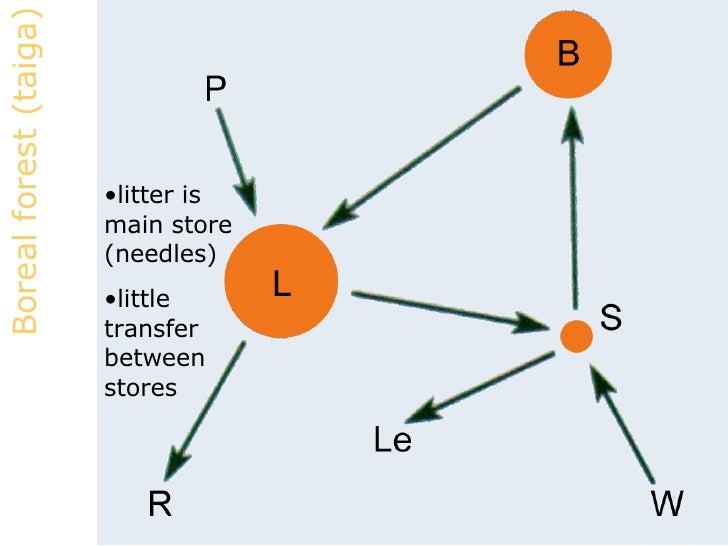 define nutrient cycle