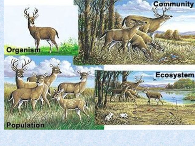 environmental science and ecosystem