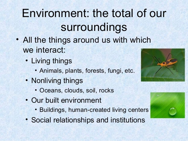Environmental science and ecosystem for Living things found in soil