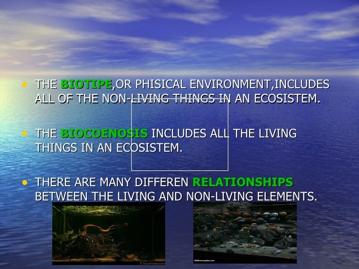 • THE BIOTIPE,OR PHISICAL ENVIRONMENT,INCLUDES  ALL OF THE NON-LIVING THINGS IN AN ECOSISTEM.• THE BIOCOENOSIS INCLUDES AL...