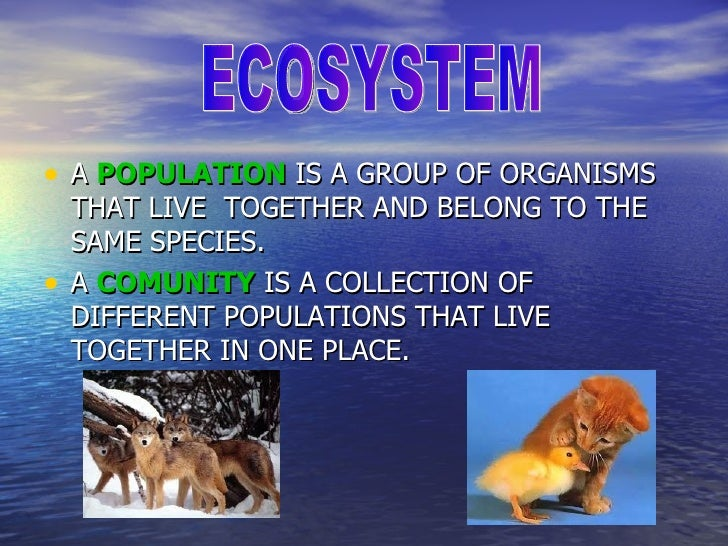 • A POPULATION IS A GROUP OF ORGANISMS    THAT LIVE TOGETHER AND BELONG TO THE    SAME SPECIES.•   A COMUNITY IS A COLLECT...