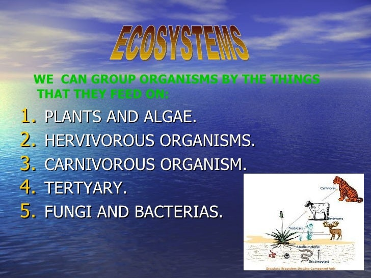 WE CAN GROUP ORGANISMS BY THE THINGS THAT THEY FEED ON:1.   PLANTS AND ALGAE.2.   HERVIVOROUS ORGANISMS.3.   CARNIVOROUS O...