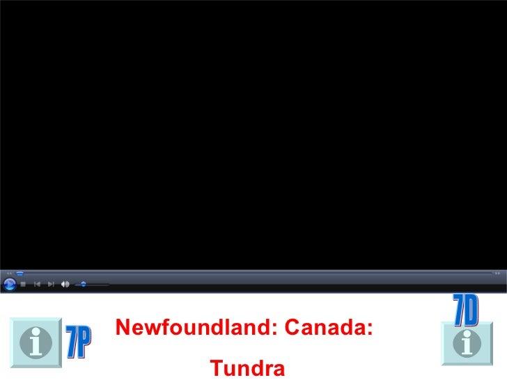 Newfoundland: Canada:  Tundra 7D 7P