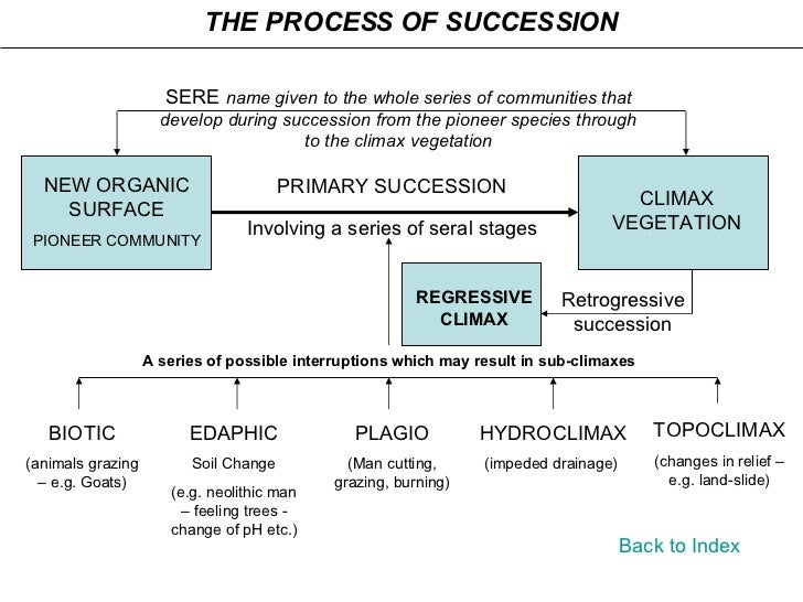 Back to Index THE PROCESS OF SUCCESSION Retrogressive succession NEW ORGANIC SURFACE PIONEER COMMUNITY CLIMAX VEGETATION S...