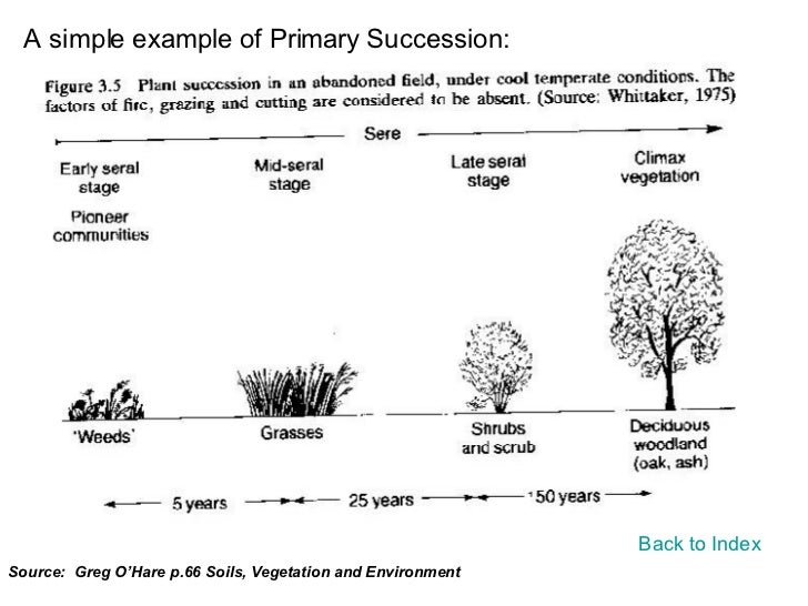 Printables Ecological Succession Worksheet ecological succession worksheet versaldobip primary davezan ecological