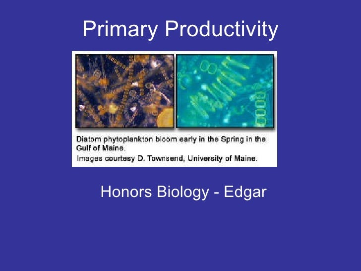 Primary Productivity Honors Biology - Edgar
