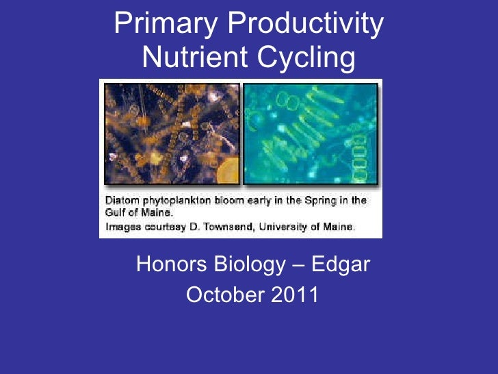 Primary Productivity Nutrient Cycling Honors Biology – Edgar October 2011