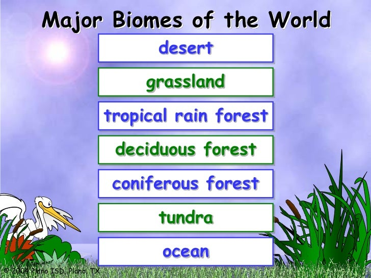 a description of the weather in tropical rain forests and different forms of life You may not be aware that a tropical rainforest can be found in many different types of terrain this includes mountains, plains, and river valleys the amount of rainfall that each gets as well as the temperatures there are the main differences.