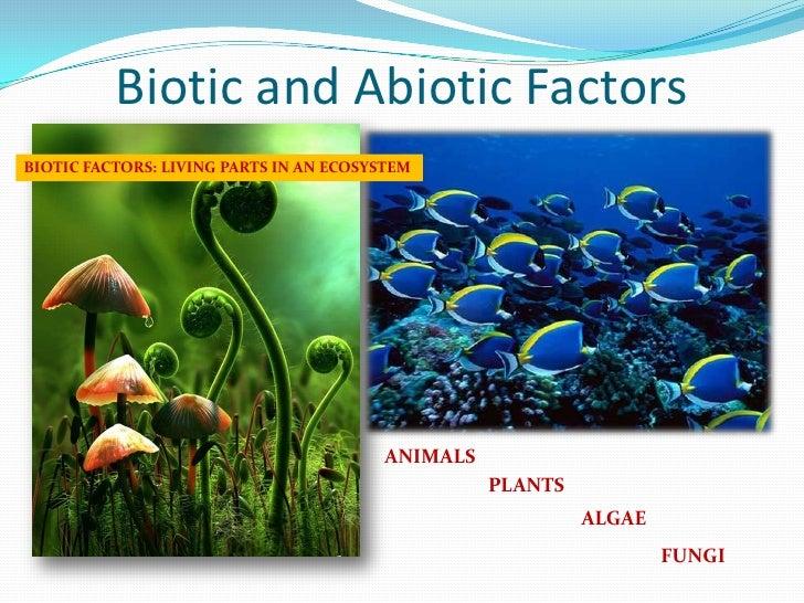 essays on biotic factor
