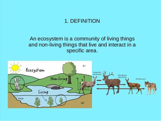 Ecosystems: definitions