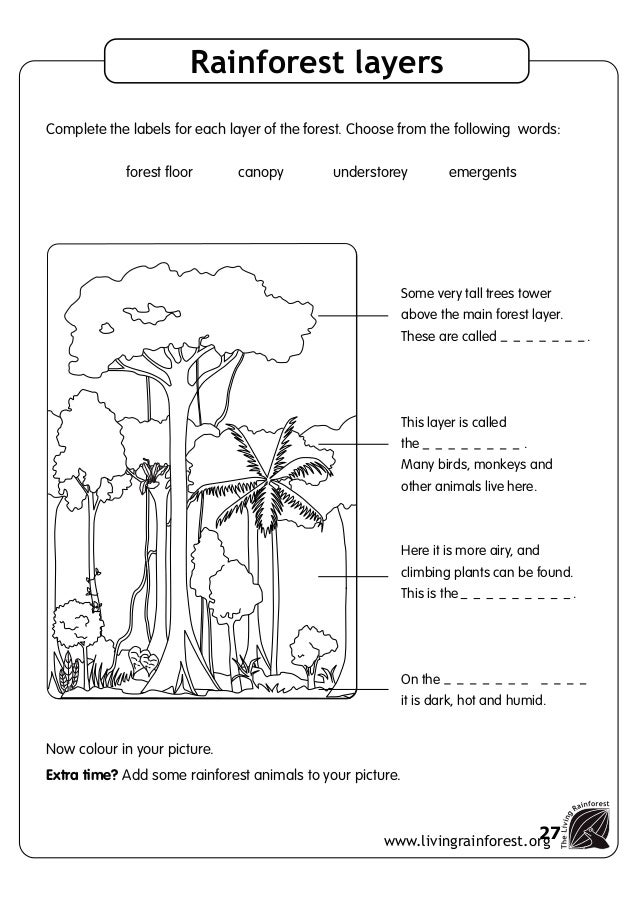 Worksheets Layers Of The Rainforest Worksheet ecosystems pack 26 27 background worksheets before your visit rainforest layers