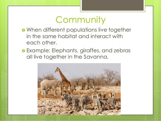 Community  When different populations live together in the same habitat and interact with each other.  Example: Elephant...