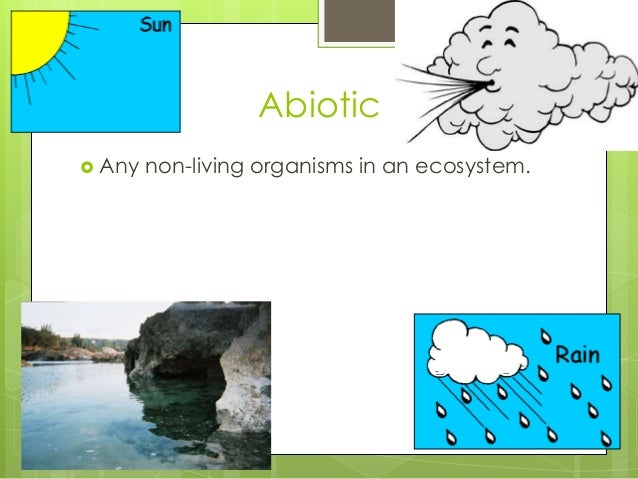 Abiotic  Any non-living organisms in an ecosystem.