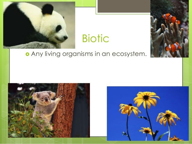 Biotic  Any living organisms in an ecosystem.