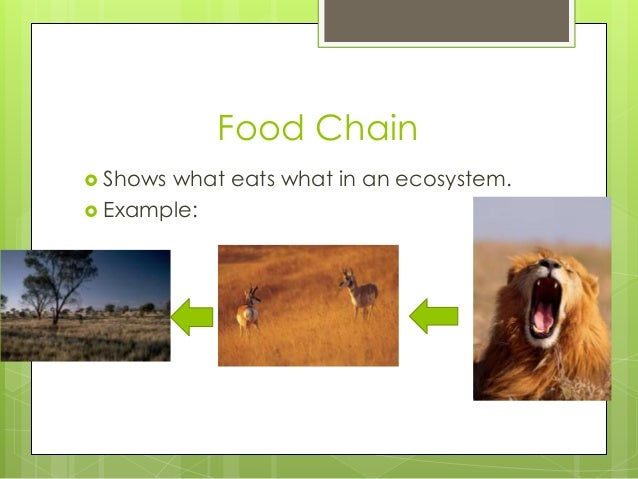 Food Chain  Shows what eats what in an ecosystem.  Example: