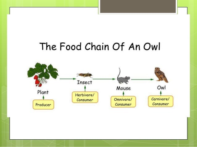Food Web  A food web consists of all the food chains within a particular ecosystem.