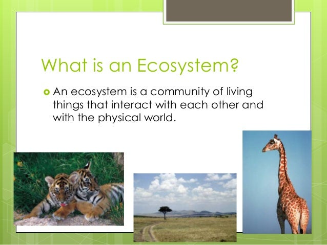 What is an Ecosystem?  An ecosystem is a community of living things that interact with each other and with the physical w...