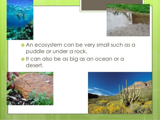  An ecosystem can be very small such as a puddle or under a rock.  It can also be as big as an ocean or a desert.
