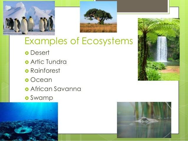 Examples of Ecosystems  Desert  Artic Tundra  Rainforest  Ocean  African Savanna  Swamp