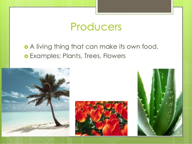 Producers  A living thing that can make its own food.  Examples: Plants, Trees, Flowers
