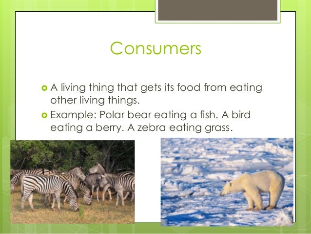 Consumers  A living thing that gets its food from eating other living things.  Example: Polar bear eating a fish. A bird...