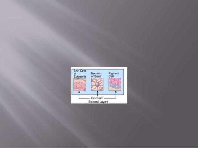  1.Pre aortic ganglion  2.Sympathetic ganglion  3.Organ plexus  4.Suprarenal gland  5.Dorsal root ganglion  6.Surfac...