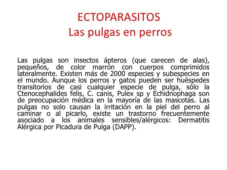 ECTOPARASITOS               Las pulgas en perrosLas pulgas son insectos ápteros (que carecen de alas),pequeños, de color m...
