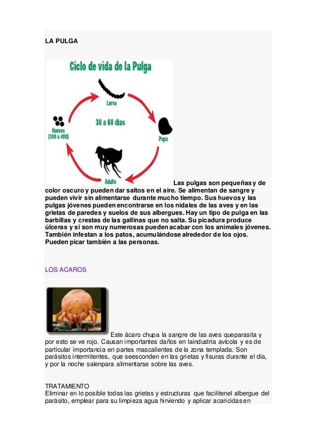 El tratamiento de los helmintos el compendio