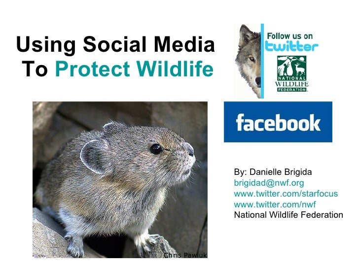 Using Social Media  To  Protect Wildlife   By: Danielle Brigida [email_address]   www.twitter.com/starfocus   www.twitter....