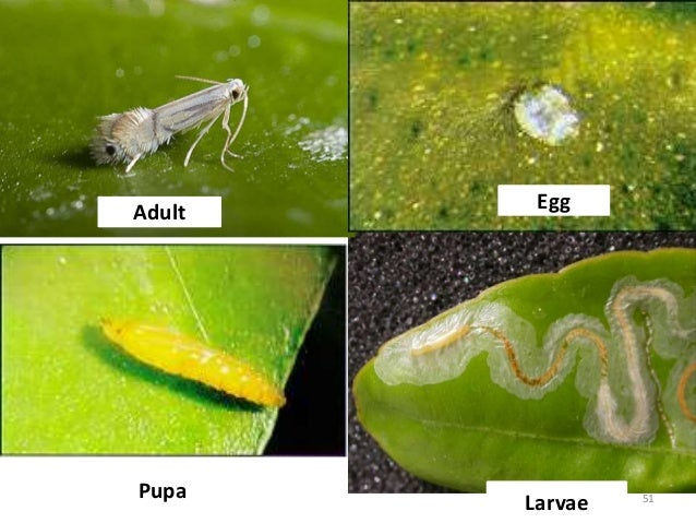 Identify and Control Insects on Fruit and Nut Crops