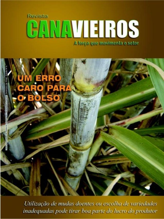Editorial  Um ano novo organizado A última edição do ano da Revista Canavieiros traz matérias que dizem basicamente a mesm...