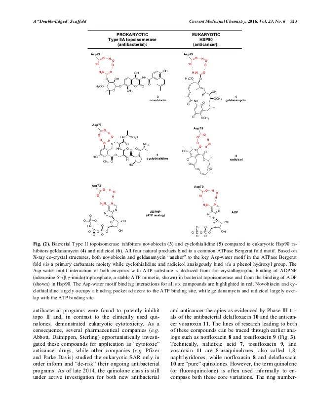 Antitumor Quinolones 2016