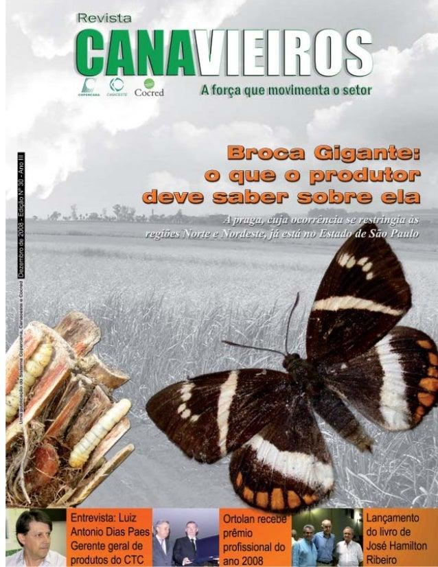 Revista Canavieiros - Dezembro de 2008  1