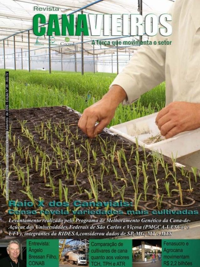 Revista Canavieiros - Setembro de 2009  1