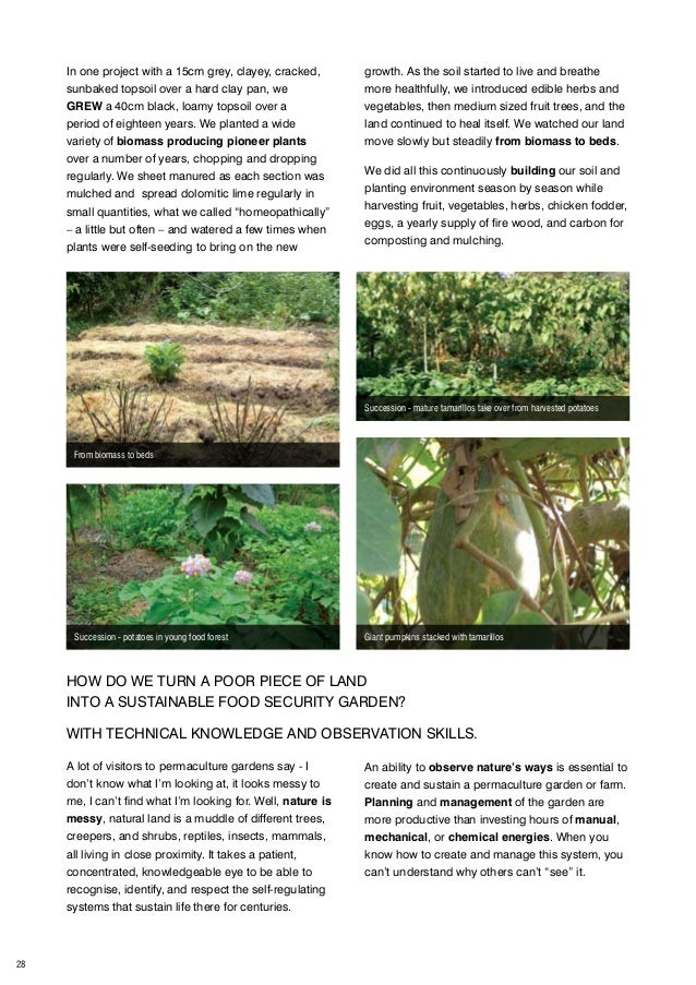 Setting Up African Permaculture School Gardens