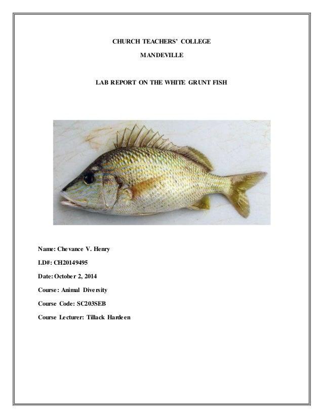 Animal diversity Lab on fish