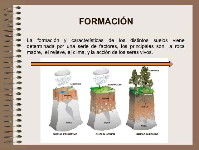 Edafolog a concepto basico de suelos for Formacion de los suelos