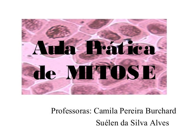 Aula Prática de MITOSE Professoras: Camila Pereira Burchard Suélen da Silva Alves