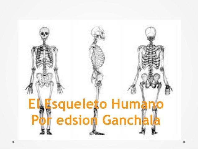 El Esqueleto Humano Por edsion Ganchala