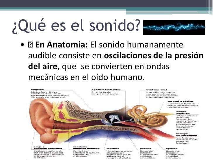 Lujoso Anatomía De Sonido Motivo - Anatomía de Las Imágenesdel ...
