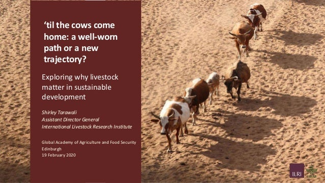 'til the cows come home: a well-worn path or a new trajectory? Exploring why livestock matter in sustainable development S...