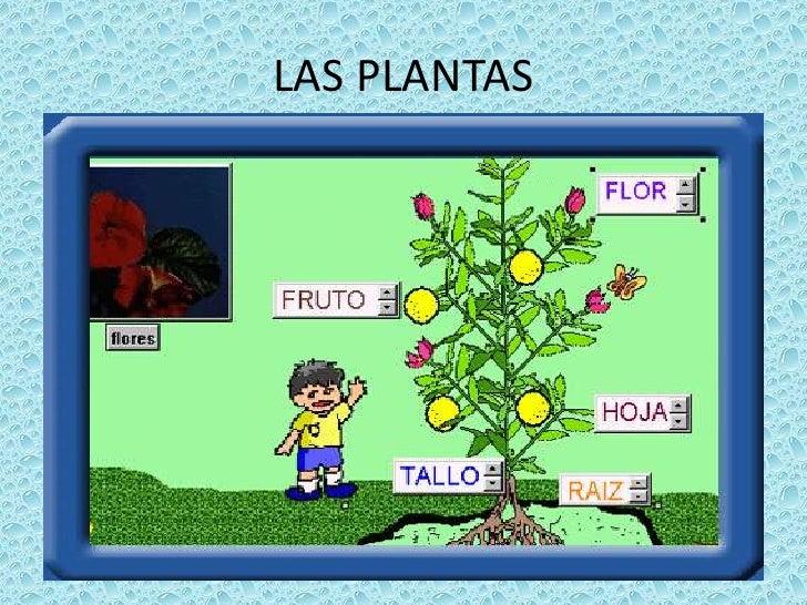 LAS PLANTAS<br />