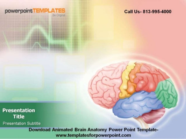 Editable Animated Brain Anatomy Powerpoint Template
