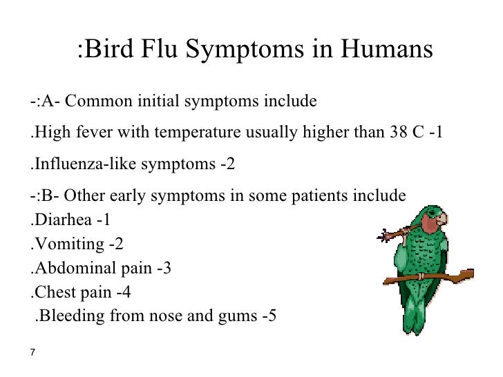 bird flu essay Bird flu virus h5n1 was first isolated form birds in south africa in 1961 within these 37 years, the virus seemed to disappear in the world but with no warning given in advance, the virus reappeared.