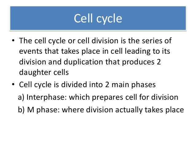 discuss in detail the cell cycle After mitosis and cytokinesis the daughter cells contain the same information for properties for heredity as the mothercell: mother cell and daughter cell are genetically identical the mitosis follows up the g2-phase of the interphase in the cell cycle.