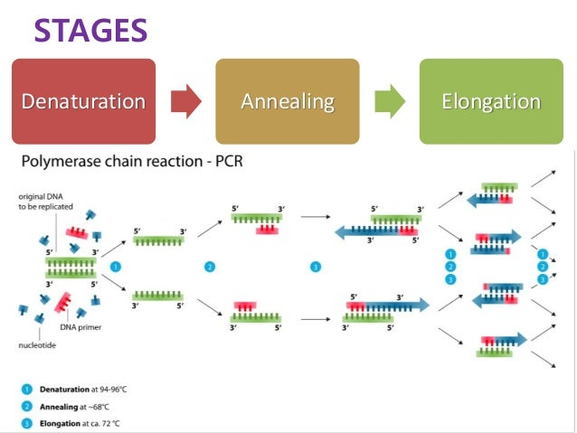 Polymerase Building New Bases