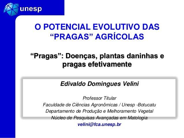 Edivaldo Domingues Velini Professor Titular Faculdade de Ciências Agronômicas / Unesp -Botucatu Departamento de Produção e...