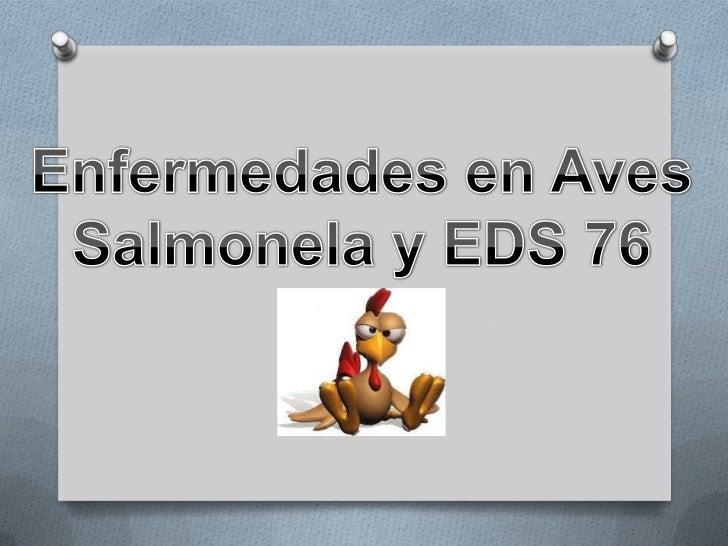 Enfermedades en Aves<br />Salmonela y EDS 76<br />